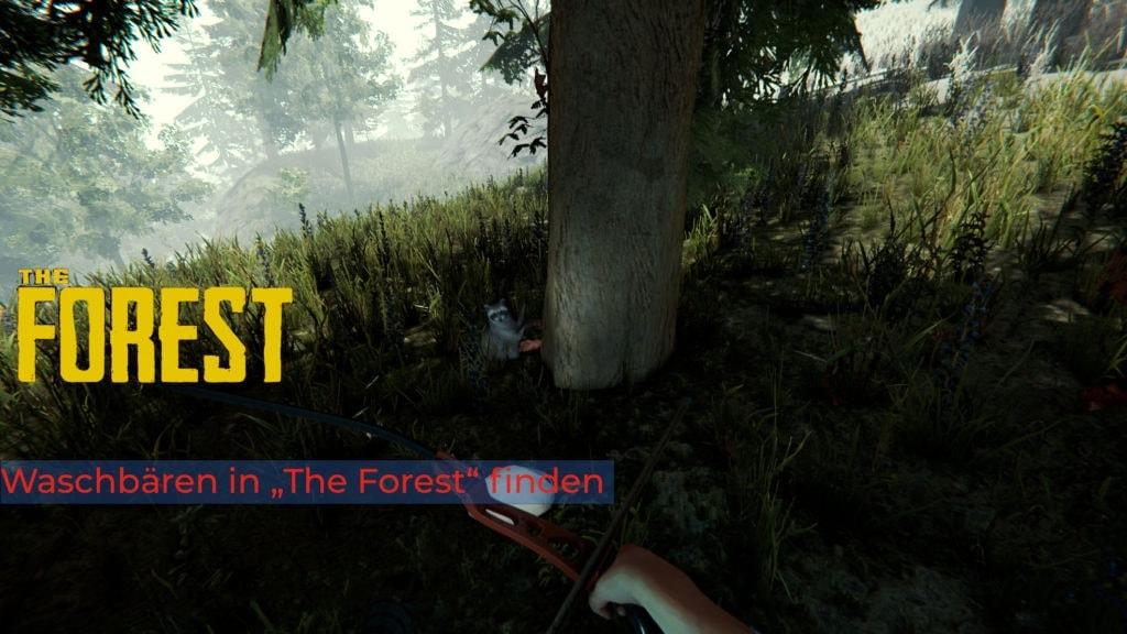 waschbären in the forest finden